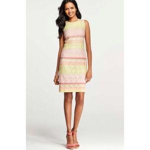 ANN TAYLOR pink lace horizon dress
